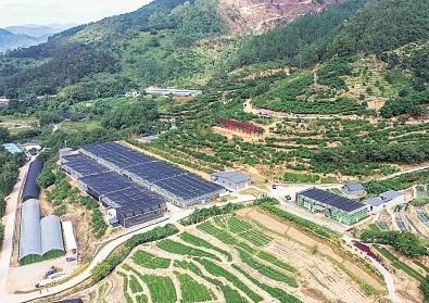 广东云浮:打造中药产业新高地