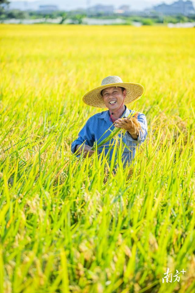 7月9日,丰收季节,农民马兴弟露出笑容。