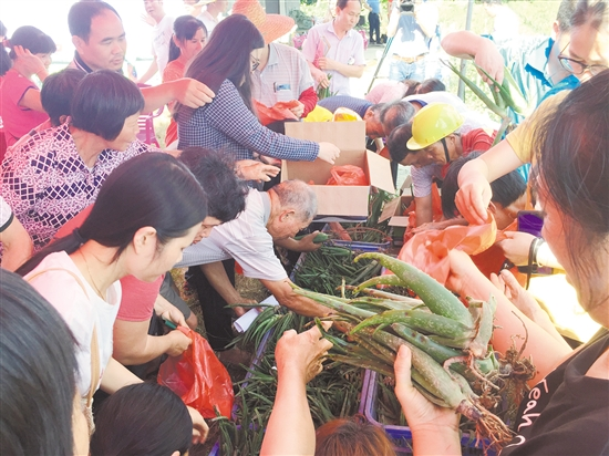 贫困户领取免费芦荟种苗。